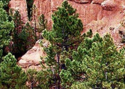 3 DESEMBRE  Canyó de Talayuelas