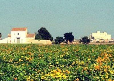 25 NOVEMBRE  Excursió per L'Horta
